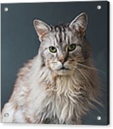 Fortunate Tails Acrylic Print