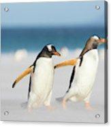 Gentoo Penguin (pygoscelis Papua Acrylic Print
