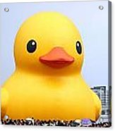 Giant Rubber Duck Visits Taiwan Acrylic Print