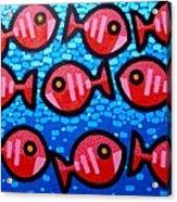 9 Happy Fish Acrylic Print