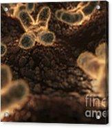Human Chromosomes Acrylic Print