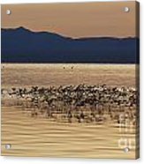 Mono Lake California Acrylic Print by Jason O Watson