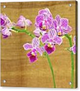 Purple Orchid-12 Acrylic Print