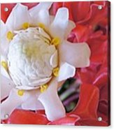 Flower For You  Acrylic Print by Gornganogphatchara Kalapun