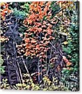 9374 Acrylic Print