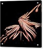 9439 Experimental Nude Abstract Acrylic Print