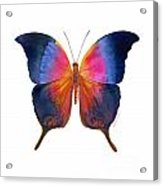 96 Brushfoot Butterfly Acrylic Print