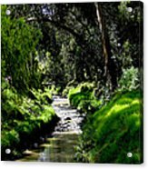 A Babbling Brook Acrylic Print by Al Bourassa