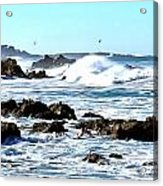Seascape And Sea Gulls Acrylic Print