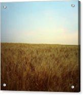 A Barley Crop Sways In The Wind Acrylic Print