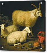 A Barn Interior With A Four-horned Ram And Four Ewes And A Goat Acrylic Print
