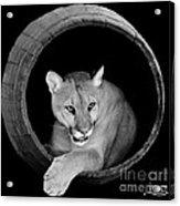 A Barrel Of Fun Acrylic Print