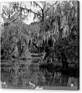 A Bayou Scene In Louisiana Acrylic Print