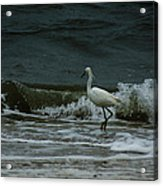 A Beautiful Snowy White Egret On Hilton Head Island Beach Acrylic Print