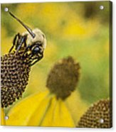 A Bee's Paradise Acrylic Print by Jeff Swanson