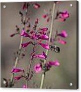 A Bee's View Acrylic Print