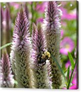 A Bee's Work Is Never Done Abwndp Acrylic Print