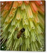 A Bee's Work Is Never Done Acrylic Print