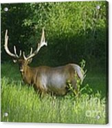 A Big Wide Rack  Acrylic Print