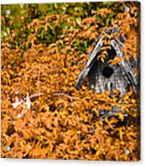 A Bird House Sits Empty In Fall Acrylic Print