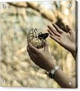 A Bird In The Hand Acrylic Print