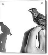 A Bird On The Hand Acrylic Print