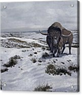 A Bison Latifrons In A Winter Landscape Acrylic Print by Roman Garcia Mora