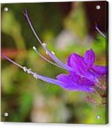 A Bit Of Purple Acrylic Print by Judy  Waller