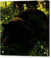 A Black Bear Acrylic Print
