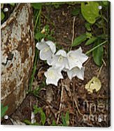 A Bloom In Time Acrylic Print