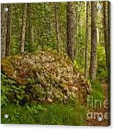 A Boulder In The Rainforest Acrylic Print