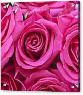 A Bouquet Of Pink Roses Acrylic Print
