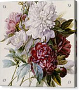 A Bouquet Of Red Pink And White Peonies Acrylic Print