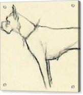A Boxer Dog Acrylic Print