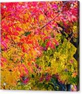 Autumn In Yountville, California Acrylic Print