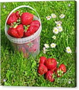 A Bucket Of Strawberries Acrylic Print