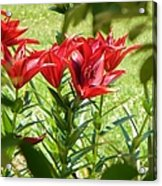 A Burst Of Red Acrylic Print