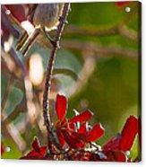 A Bushtit Bird Acrylic Print