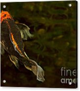 A Butterfly Acrylic Print