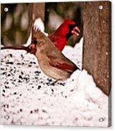 A Cardinal Couple Acrylic Print