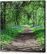 A Carpet Of Colour 2 Acrylic Print