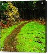 A Carpted Path Acrylic Print