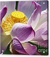 A Casual Water Lily Acrylic Print