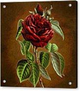 A Chocolate Beauty Acrylic Print