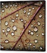A Close Up Of A Wet Leaf Acrylic Print
