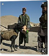 A Coalition Forces Military Working Dog Acrylic Print