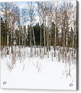 A Cold Winter Day Acrylic Print