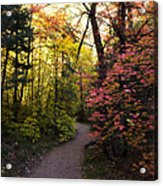 A Colorful Path  Acrylic Print
