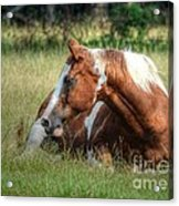 A Comfy Resting Place Acrylic Print