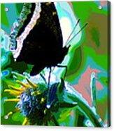 A Cosmic Butterfly Acrylic Print